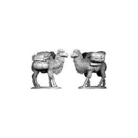 Asian Pack Camels (2)
